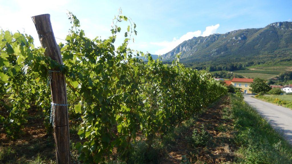 Weinanbauregion um Vrhpolje