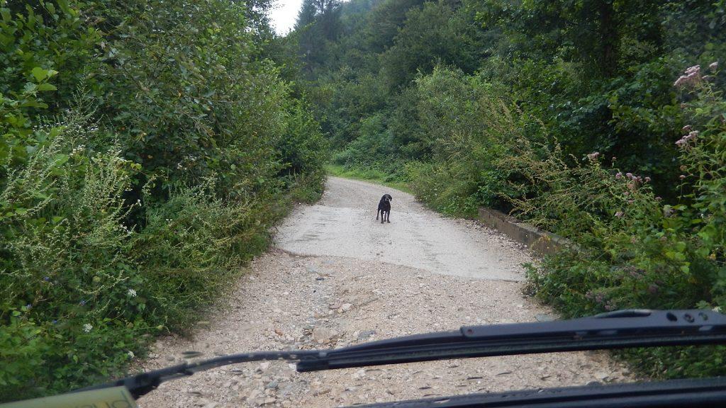 Hund versperrt Straße Bosnien Srpska