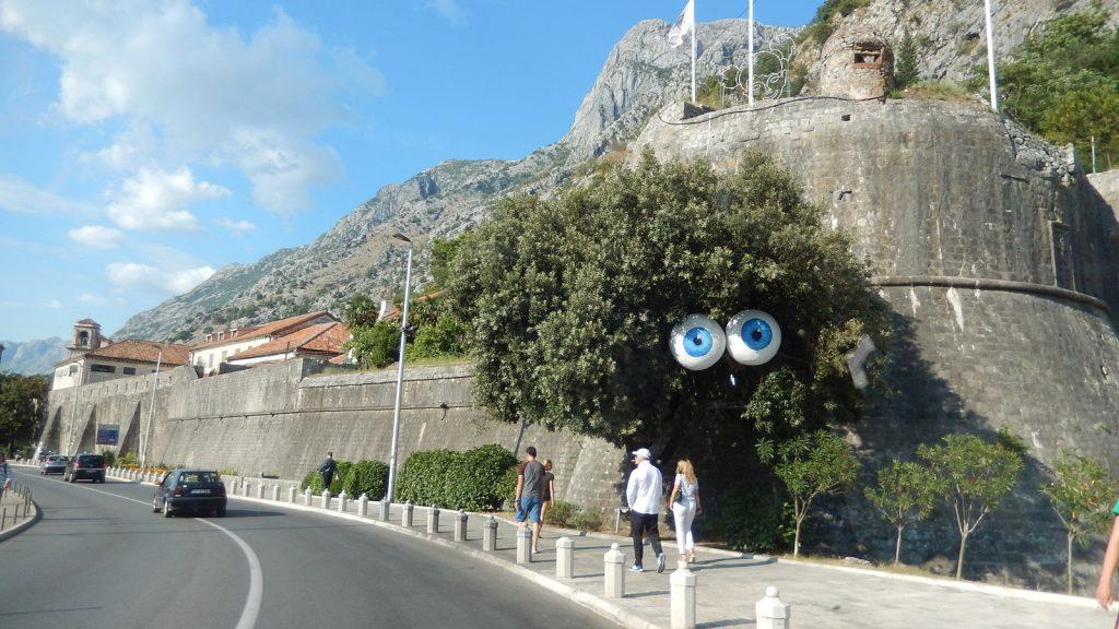 Baum mit Augen in Kotor, Montenegro