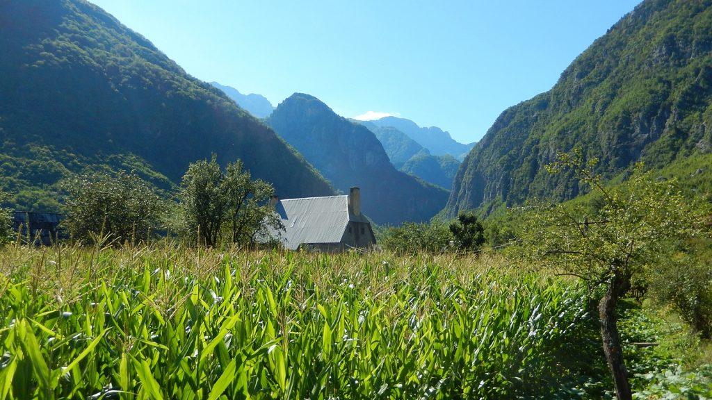 Maisfeld in Nderlysaj, Albanien