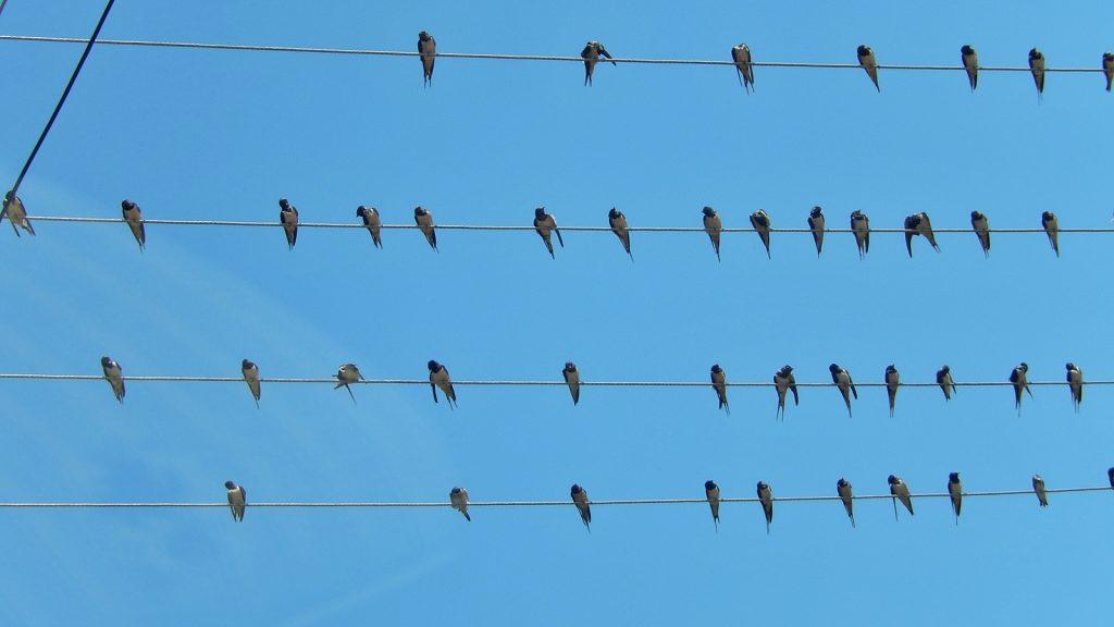 Die Vögel, Alfred Hitchcock in Albanien