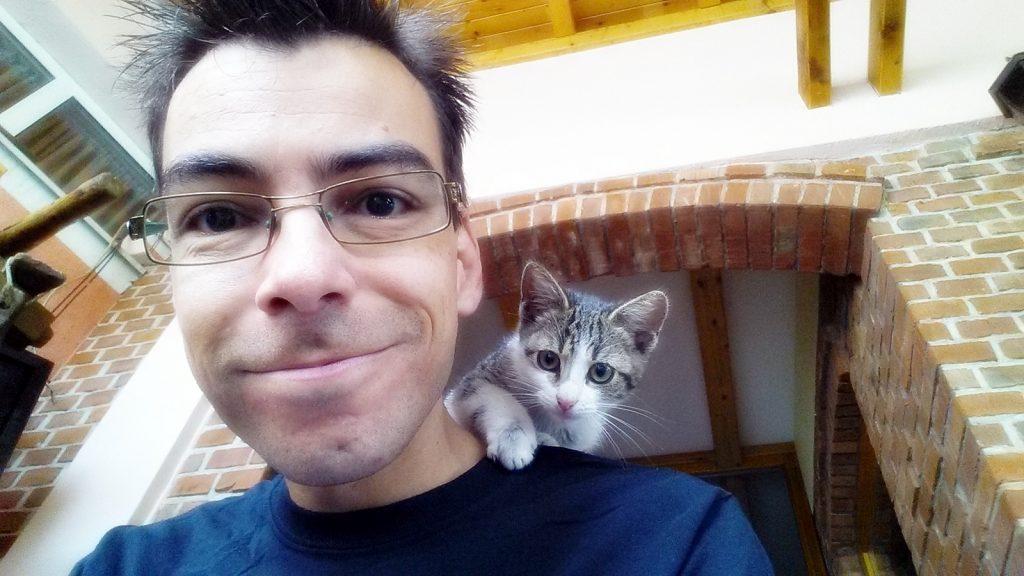 Kleine, junge, süße Katze
