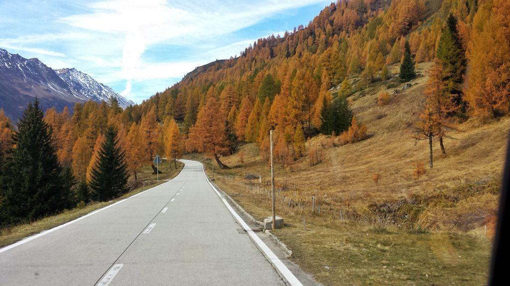 Herbstliche Nadelbäume