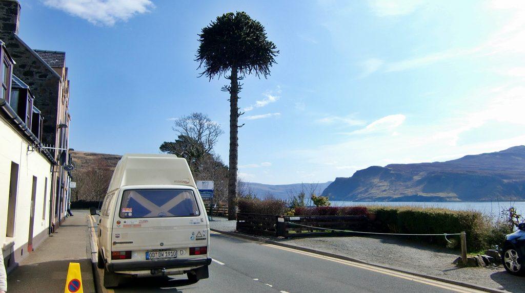 Mediterraner Baum?