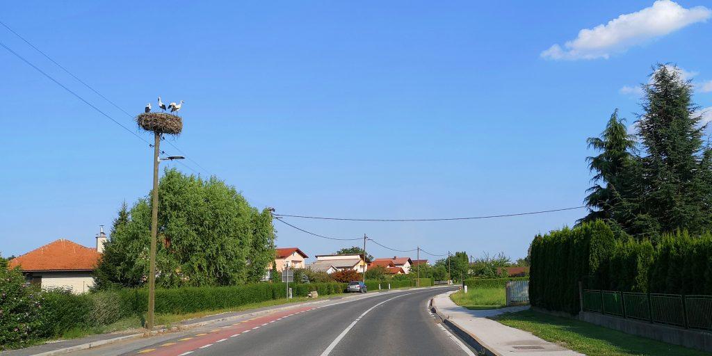Störche in Slowenien