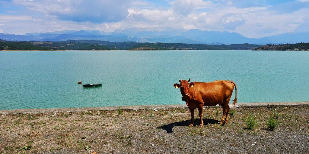 Ulas-Stausee, Ulëz, Albanien