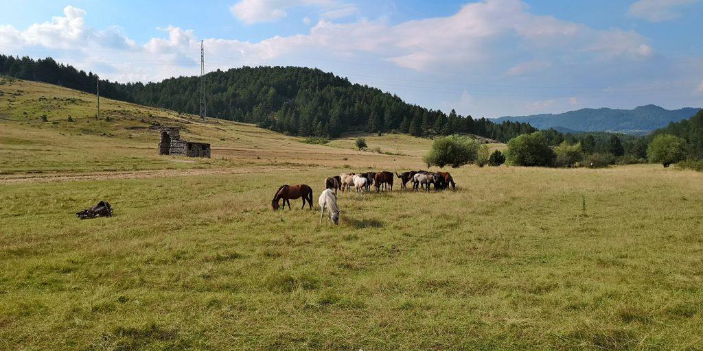 Pferde sind die einzigen Lebewesen weit und breit.