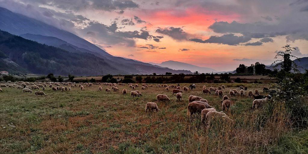 Sonnenuntergang mit Schafen, Albturist Campingplatz Përmet
