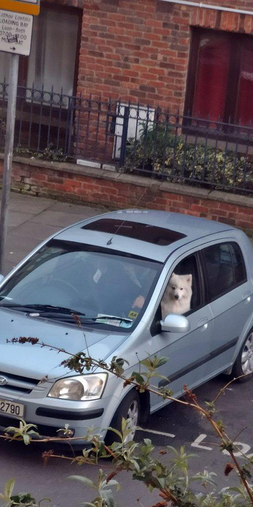 Wenn der Hund besser einparkt als die Besitzer... ;)