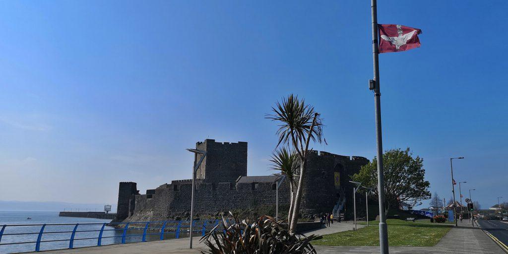 Irische Schafspalme vor Carrickfergus Castle