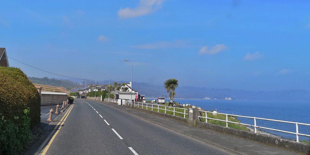 Irische Schafspalme an der Küste der Irischen See