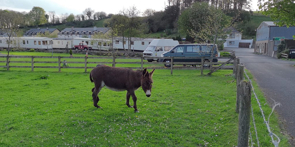 Camping mit Esel: Ballycarra