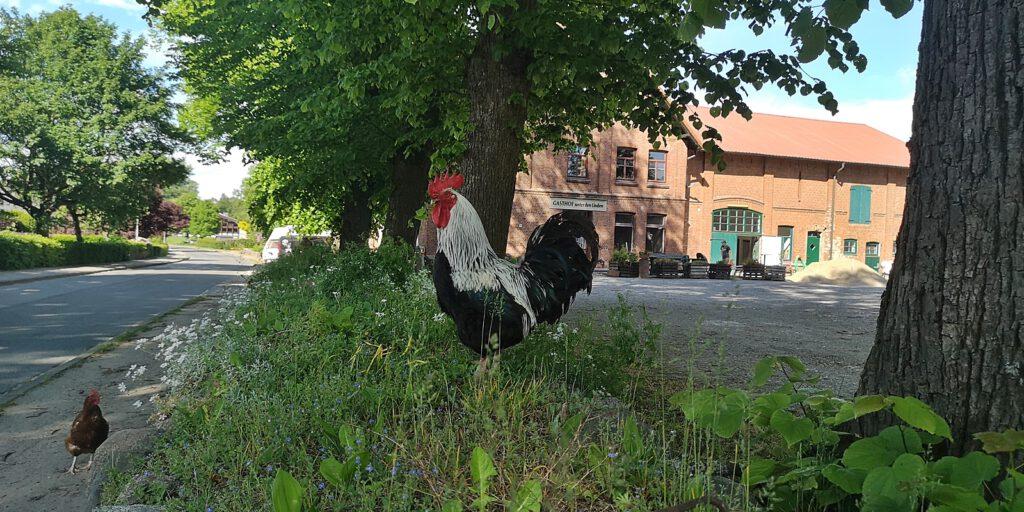 Gasthof Unter den Linden aka Dorfkrug