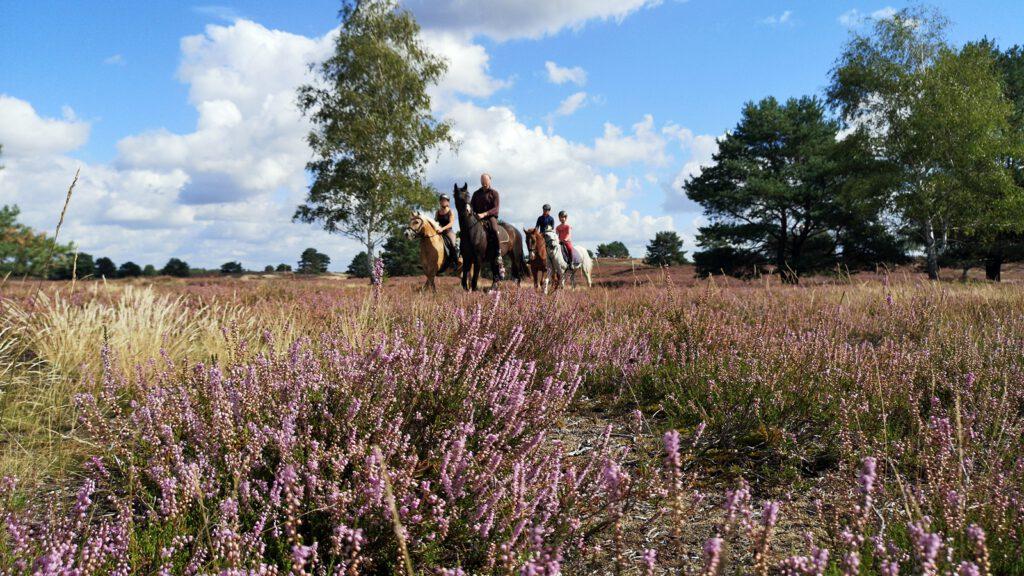 Zu Pferd durch die Nemitzer Heide im Wendland
