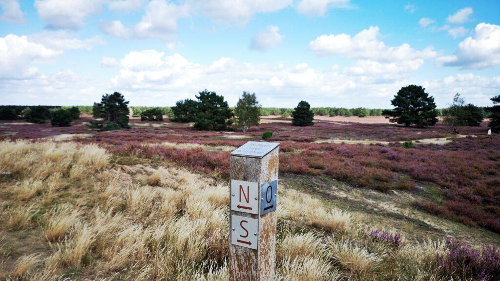 Blick von der Düne auf die Nemitzer Heide